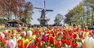 Keukenhof tulip garden Holland 300x153